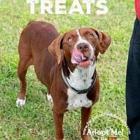 Adopt A Pet :: Marley - Pearland, TX