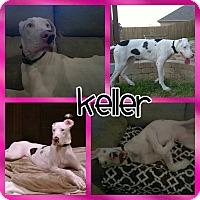 Adopt A Pet :: Keller - Lubbock, TX