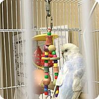 Adopt A Pet :: Elmira - Punta Gorda, FL
