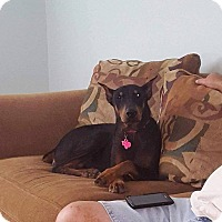 Adopt A Pet :: Greta - Fort Worth, TX