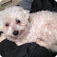 Adopt A Pet :: Tigger - Benton, PA