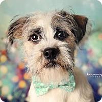 Adopt A Pet :: Griffy - Nashville, TN