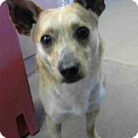 Adopt A Pet :: *LOUIE - Sacramento, CA