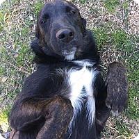 Adopt A Pet :: Bart - Uxbridge, MA