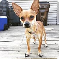 Adopt A Pet :: Lovely - Newport, KY