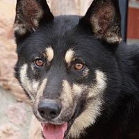 Adopt A Pet :: Rocco von Rochlitz - Los Angeles, CA