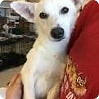 Adopt A Pet :: Shasta ADBR in TX - Providence, RI