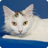 Adopt A Pet :: Roosevelt - Coronado, CA