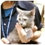 Photo 2 - Domestic Shorthair Kitten for adoption in Annapolis, Maryland - Pippy