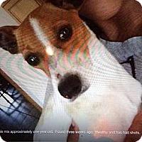 Adopt A Pet :: Franklin in Houston - Houston, TX