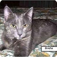 Adopt A Pet :: Greta (video) - Portland, OR