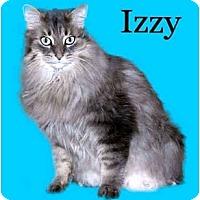 Adopt A Pet :: Izzy - Howell, MI
