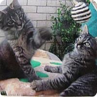 Adopt A Pet :: Zackery - Brea, CA