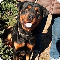 Adopt A Pet :: Roscoe - Athens, GA