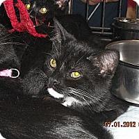 Adopt A Pet :: Simon - Riverside, RI