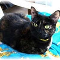 Adopt A Pet :: Freckles - Shelton, WA