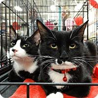 Adopt A Pet :: Tip and Tux - Harrisburg, NC