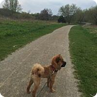 Adopt A Pet :: Bear - Tillsonburg, ON