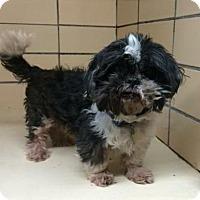 Adopt A Pet :: Sherlock - Homer Glen, IL