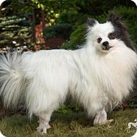 Adopt A Pet :: Callie - Salem, OR