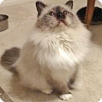 Adopt A Pet :: Lenny - Davis, CA