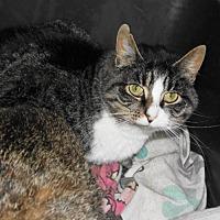 Adopt A Pet :: Imagene - Frenchburg, KY