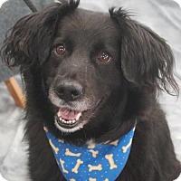 Adopt A Pet :: Rufus - Garfield Heights, OH