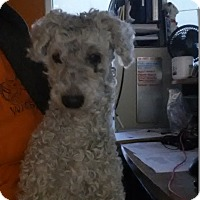 Adopt A Pet :: Harold - Westminster, CA