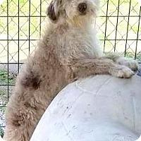 Adopt A Pet :: SHAGGY)ADORABLE