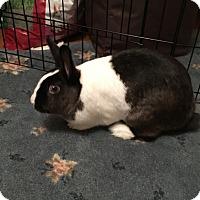 Adopt A Pet :: Agnes & Leia - Alexandria, VA
