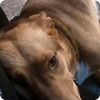 Adopt A Pet :: Sally - Ypsilanti, MI