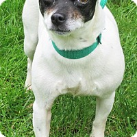 Adopt A Pet :: Lucy - Elkins, WV