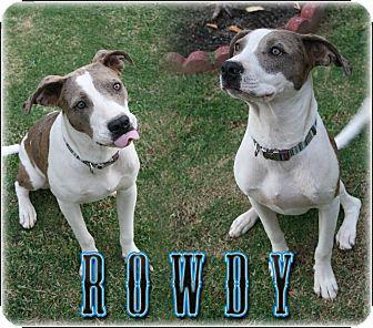 Catahoula Leopard Dog/Labrador Retriever Mix Puppy for adoption in Bakersfield, California - Rowdy
