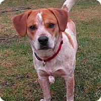 Adopt A Pet :: Fresno - Hamilton, ON