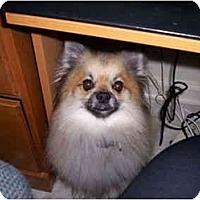Adopt A Pet :: Rocky - Chesapeake, VA