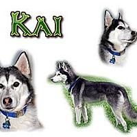 Adopt A Pet :: Kai - Seminole, FL