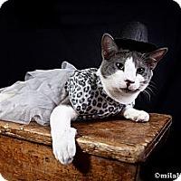 Adopt A Pet :: Prince - Naples, FL