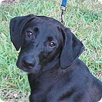 Adopt A Pet :: Cherry - Kingwood, TX