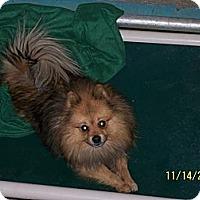 Adopt A Pet :: Happy - Seattle, WA