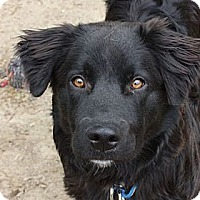 Adopt A Pet :: Harley - PENDING, in Maine - kennebunkport, ME