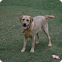 Adopt A Pet :: Cissy - Cumming, GA