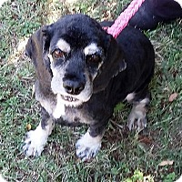 Adopt A Pet :: Lady Bug - Sacramento, CA