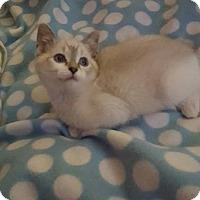 Adopt A Pet :: Stella - Union, KY