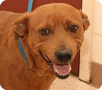 Hound (Unknown Type) Mix Dog for adoption in McDonough, Georgia - Sheldon