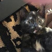 Adopt A Pet :: Paula - Woodland Hills, CA