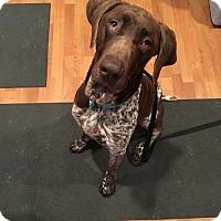 Adopt A Pet :: Booker - Menlo Park, CA