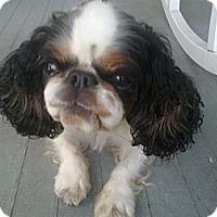 Adopt A Pet :: Faith - Cumberland, MD