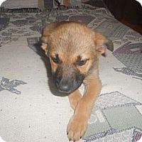 Adopt A Pet :: Sam - San Diego, CA