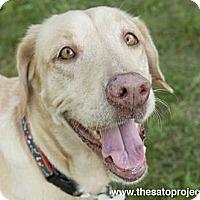 Adopt A Pet :: Odette - Brooklyn, NY
