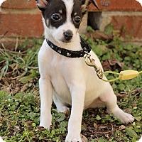 Adopt A Pet :: Alex - Brattleboro, VT